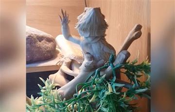 Reptil que saluda a su dueño causa furor en las redes sociales