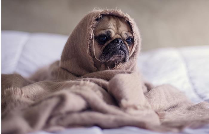 ¿Es bueno o malo dormir con mascotas?