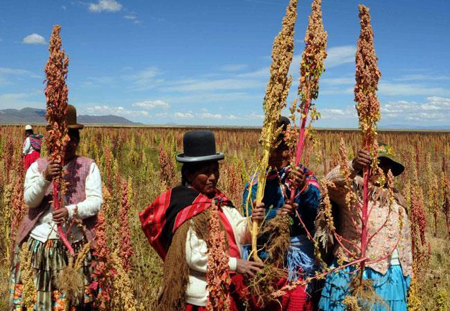 Quinua real se impone en ferias culturales del Dakar 2018 en Oruro