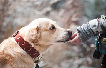Científico está construyendo el primer traductor para mascotas