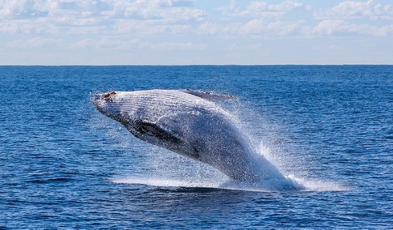 Japón decidió continuar con la caza de ballenas