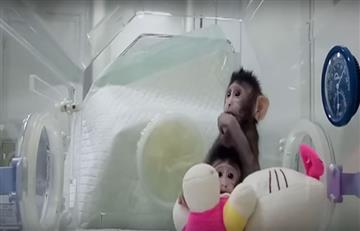 China: La clonación de monos que genera polémica en el mundo