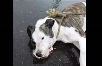 Falleció Palomino, el perro que fue torturado por policías