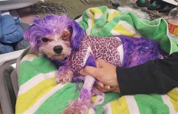 Facebook: Perrita casi muere luego de que sus dueños le tinturaran el pelo