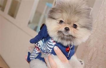 Lina Tejeiro: Así aclaró los rumores del precio que pagó por su perro