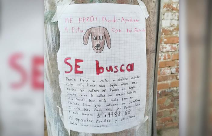 Fue hallada 'Lulú', la perrita que un niño dibujó para encontrarla