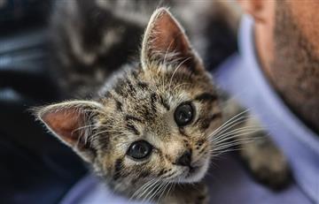 Día del Gato: ¿Cómo se comunican los gatos con sus dueños?