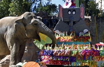Elefanta cumple años registrando un nuevo récord