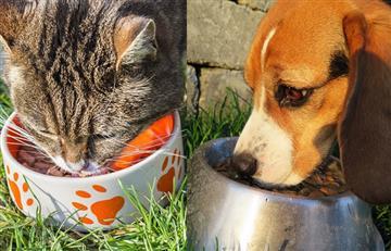 ¿Por qué los gatos y los perros necesitan alimento húmedo?