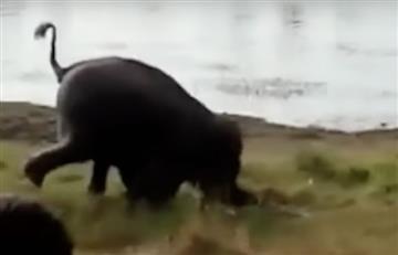 India: Elefante pisotea salvajemente a un granjero hasta matarlo