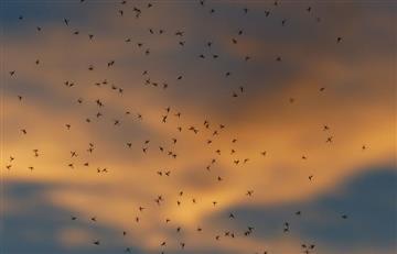 Inteligencia artificial borra de un golpe a los mosquitos y la malaria