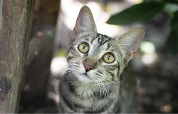 Luhu, el curioso gato que causa furor en redes sociales