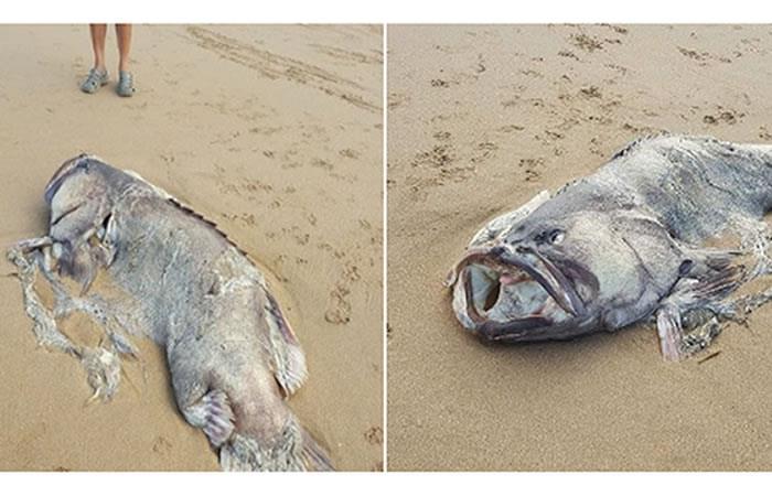 Un pez enorme causa desconcierto en la costa de Australia