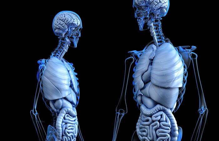 Descubren un nuevo órgano en el ser humano