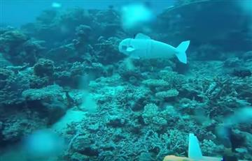 Crean el primer pez robot para estudiar los ecosistemas marinos
