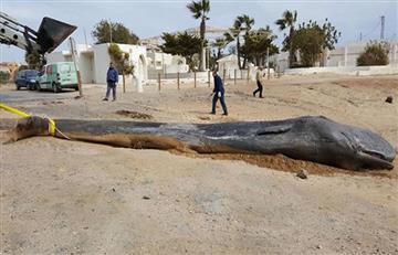 España: Hallan un cachalote que murió por una indigestión de plásticos
