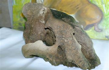 Científicos hallan misterioso cráneo de tigre dientes de sable