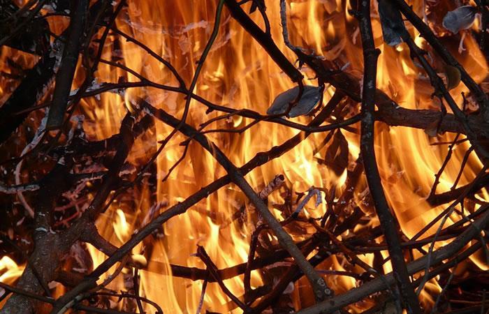 Descubren aves que provocan incendios de manera intencionada