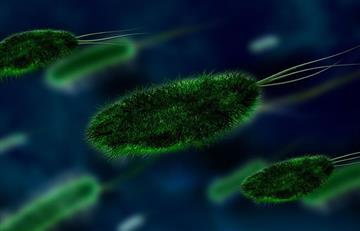 Científicos descubren que algunas bacterias se alimentan de penicilina