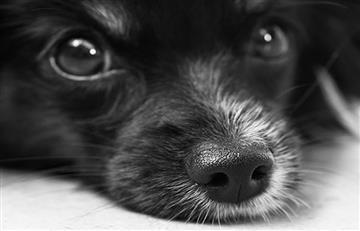 España extradita a veterinario colombiano que traficaba drogas en mascotas