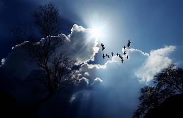 Las aves son el mejor indicador del estado del medioambiente