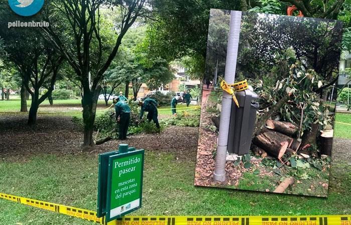 Polémica por tala de árboles en el parque El Virrey de Bogotá