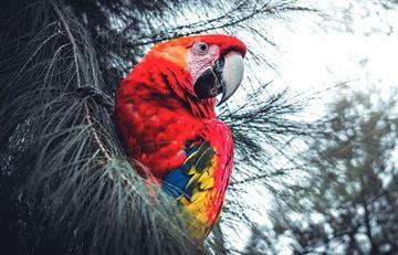 Colombia rompe propio récord y es bicampeona en avistamiento de aves