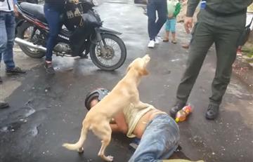 Viral: Perro protege a su amo mientras esta borracho