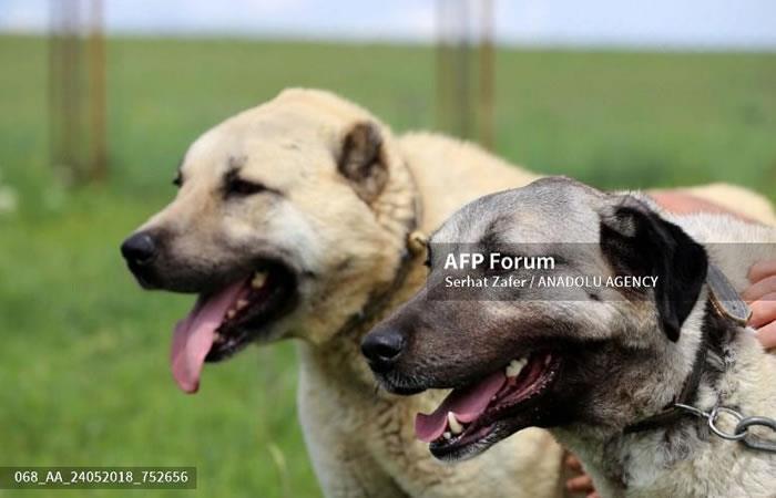 Bogotá: Se registra un envenenamiento masivo de perros en la ciudad