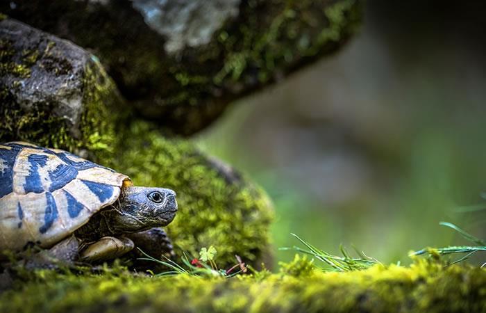 Descubren nueva especie de tortuga en el oeste de México