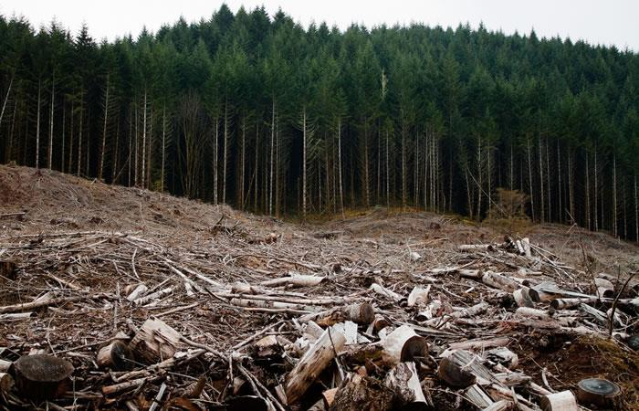 Brasil y Colombia comparten experiencias para combatir delitos ambientales. Foto: EFE