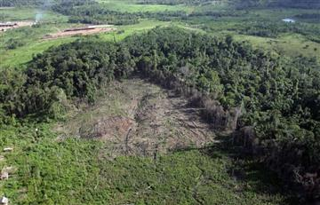Crítica situación por la deforestación en Colombia