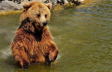 Video: Un oso tocando trompeta sorprende en las calles de Moscú