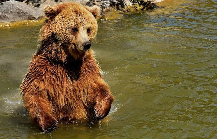 Foto: Pixabay. Sorprendente presentación de un oso en Moscú.