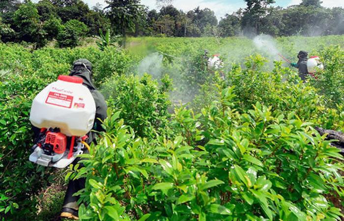 EE.UU.: Cultivos de coca en Colombia alcanzan su mayor nivel histórico