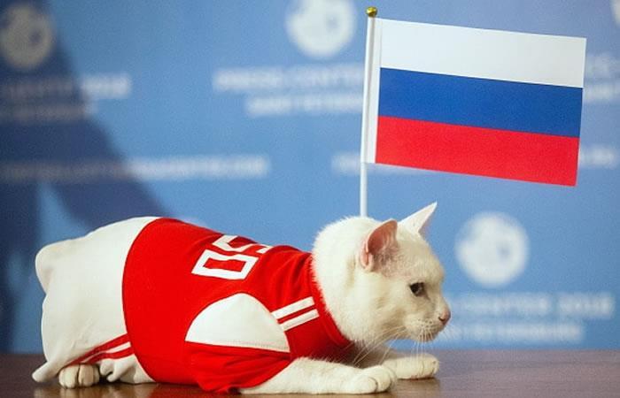 Rusia 2018: Gato Aquiles, oráculo oficial del Mundial, decide el primer finalista