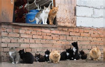 Bucaramanga: Encuentran varias decenas de animales degollados