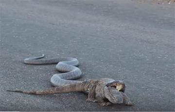 Video: La impresionante pelea entre una cobra y un lagarto