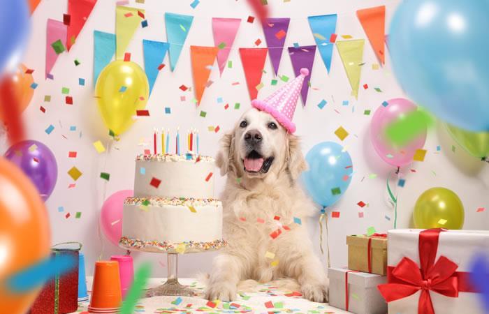No hay mal que no cure el amor de un perrito. Foto: Shutterstock