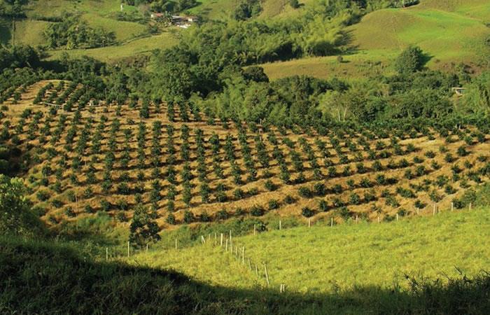 En Colombia el sector cafetero registra rentabilidad