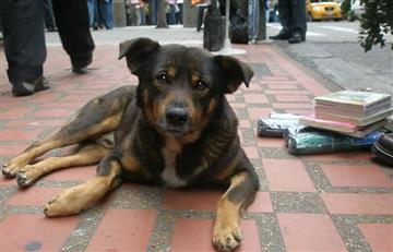 ¿Cuándo es el Día Internacional del Perro Callejero?