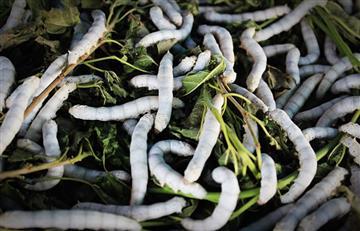 Científicos reviven gusanos de 42.000 años