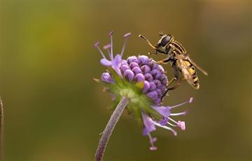 ¿El polen de las flores sirve de herramienta científica para conocer el pasado?