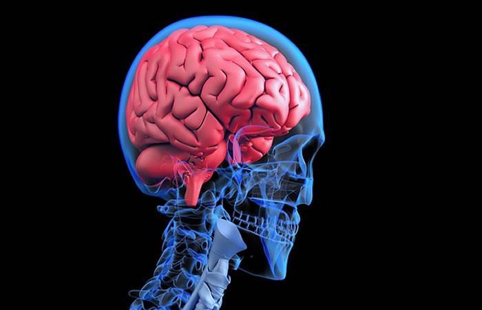 Virus de la rabia afectaría células nerviosas del cerebro