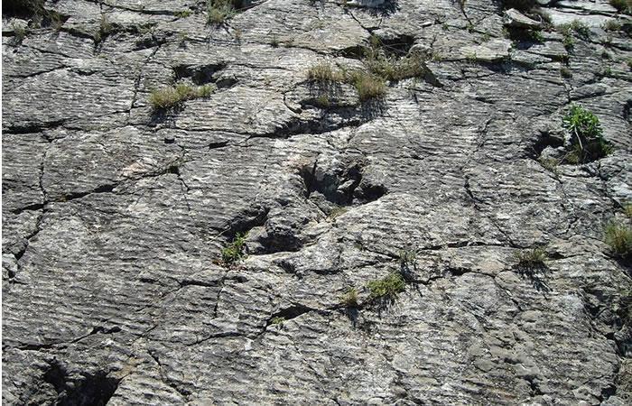 Huellas confirman que Alaska fue una 'autopista' para los dinosaurios
