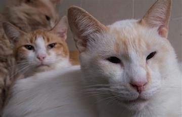 """""""La casita gatuna"""" refugia a los gatos con leucemia"""