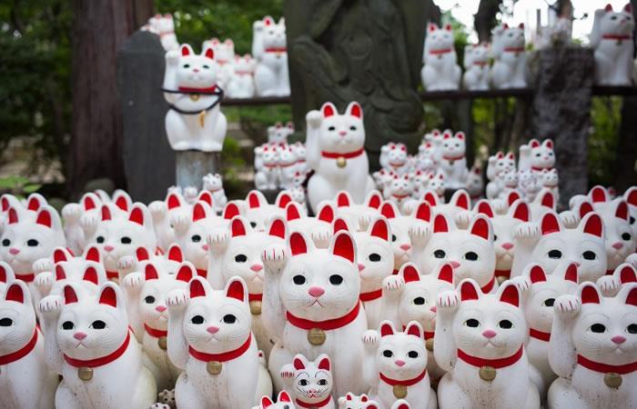 En Tokio, un templo de 'gatos de la suerte' atrae a 'instagramers'. Foto: AFP