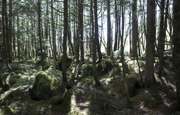 Japón: Aparece sano y salvo niño de dos años perdido 3 días en un bosque