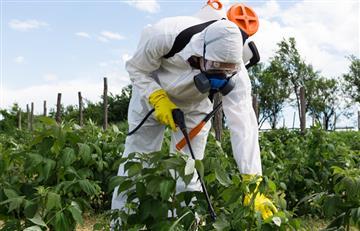 Pesticidas domésticos causarían alteraciones en la sangre