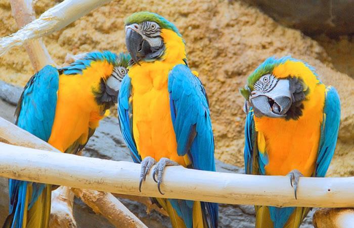 Descubren misterio animal en guacamayos